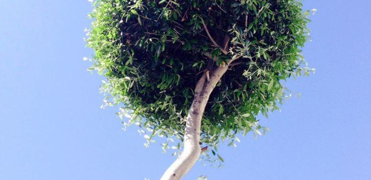Tree - Copy