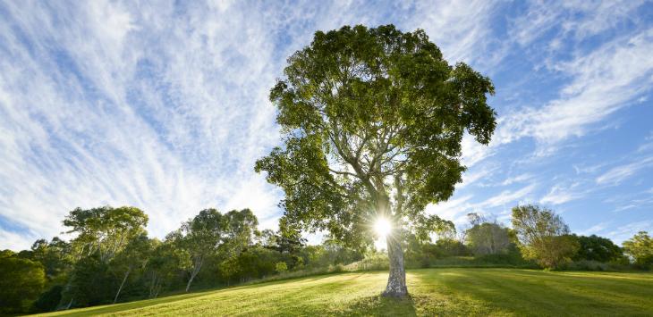 Tree blog imageSIZED