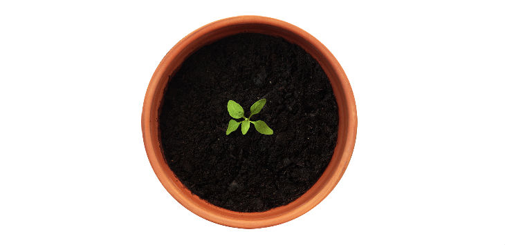 Planting seeds for growth