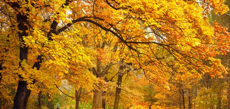 Deloitte-uk-autmn-leaves
