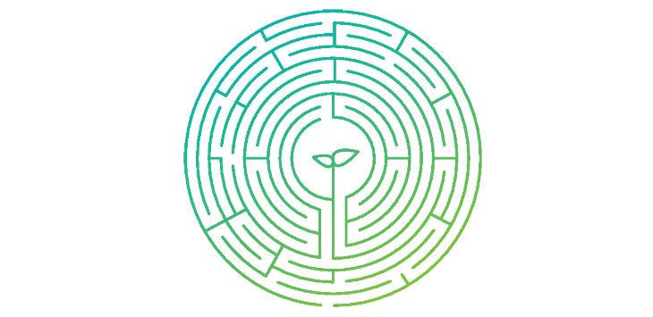 MB Maze Seedling