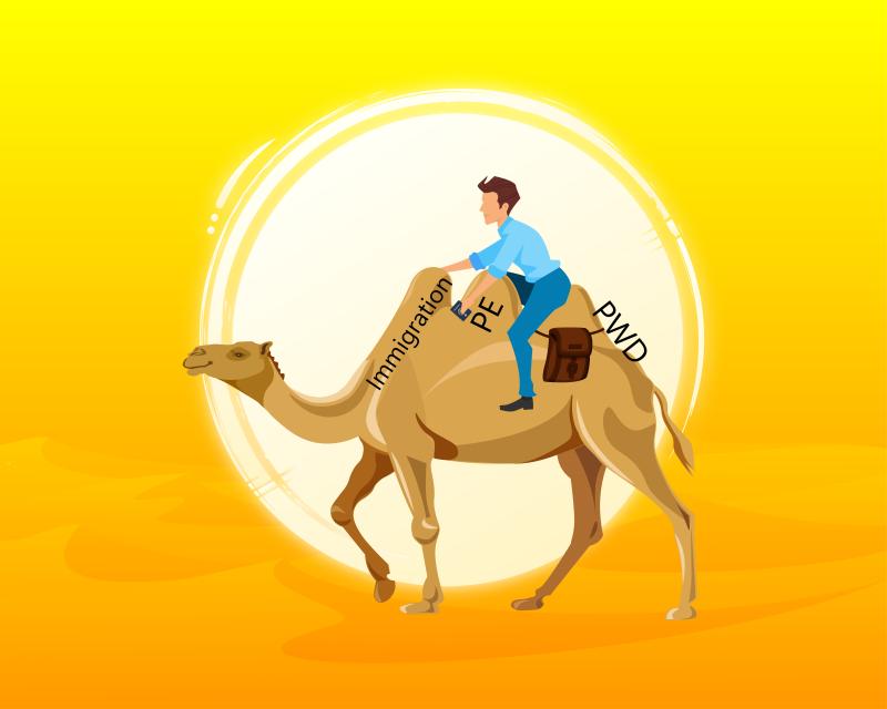 565370 Camel Horse committee-01 (002).jpg